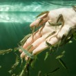 Hand in water with fishes - Stock Photo