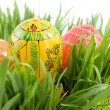 Color easter eggs in nest from green grass — Stock Photo #3379609