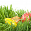 Color easter eggs in nest from green grass — Stock Photo #3379613