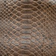 Brown crocodile texture - Stock Photo