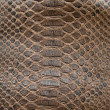 Brown crocodile texture — Stock Photo