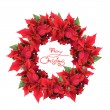 Christmas wreath from poinsettia — Stock Photo #3379865