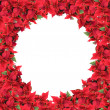 Christmas frame from poinsettias — Stock Photo #3379895