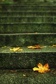 Autumn leaf on stairs — Stock Photo