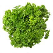 Bouquet of parsley — Stock Photo