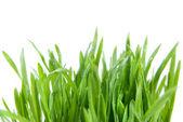 クローズ アップの緑の草の根を持つ — ストック写真