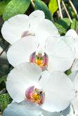 White orchids — ストック写真