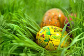 Color easter eggs in nest from green grass — Stockfoto