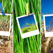 Royalty-Free Stock Photo: Photos of wheat hang on rope with pins. Seasonal growth concept