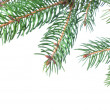 Branch of christmas fir tree — Foto de stock #3381220