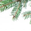 Stockfoto: Branch of christmas fir tree