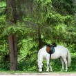 Horse in the forest - Stock Photo