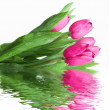 Close-up pink tulips with water reflection — Stock Photo #3384155