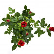 Red rose bouquet  — Foto de Stock