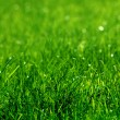 Green grass background — Stock fotografie #3384438