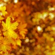 Autumn yellows leaves — Stock Photo