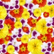 Color flowers background — Stock Photo #3384448