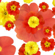 Color flowers background — Stock Photo