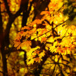 Autumn yellow leaves — Foto de Stock