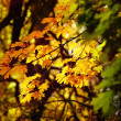 Stock Photo: Autumn yellow leaves