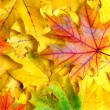 Background with autumn leaves — Stock Photo #3384533