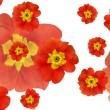 Stock Photo: Color flowers background