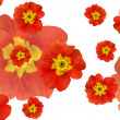 Color flowers background — Stock Photo #3384539
