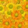 Stock Photo: Yellow flowers background
