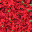 Christmas flower background — Stock Photo