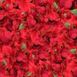 Christmas flower background — Stock Photo #3384543