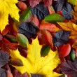 Autumn leaves background - Foto Stock