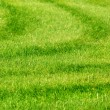 Green grass background with stripes — Stock Photo