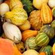 Background from small different pumpkins - ストック写真