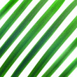 Pattern from green palm leaves isolated on white — Stock Photo