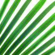 Natural pattern from green palm leaves isolated on white — Stock Photo