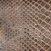 Brown crocodile texture — Stock Photo