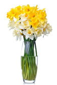 Bouquet from white and yellow narcissus in vase — Stock Photo