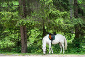 Horse in the forest — Stock Photo