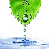 Zelený list s kapky vody a splash — Stock fotografie