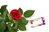 Rode roos met lege greetting kaart — Stockfoto