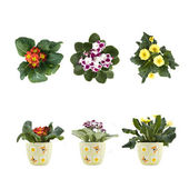 Violet and marguerite bouquet in pots — Stock Photo