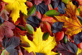 Autumn leaves background — Zdjęcie stockowe