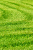 Green grass background with stripes — Stockfoto
