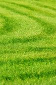 Grönt gräs bakgrund med ränder — Stockfoto