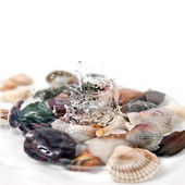 Water splash with various color shells isolated on white — Stock Photo