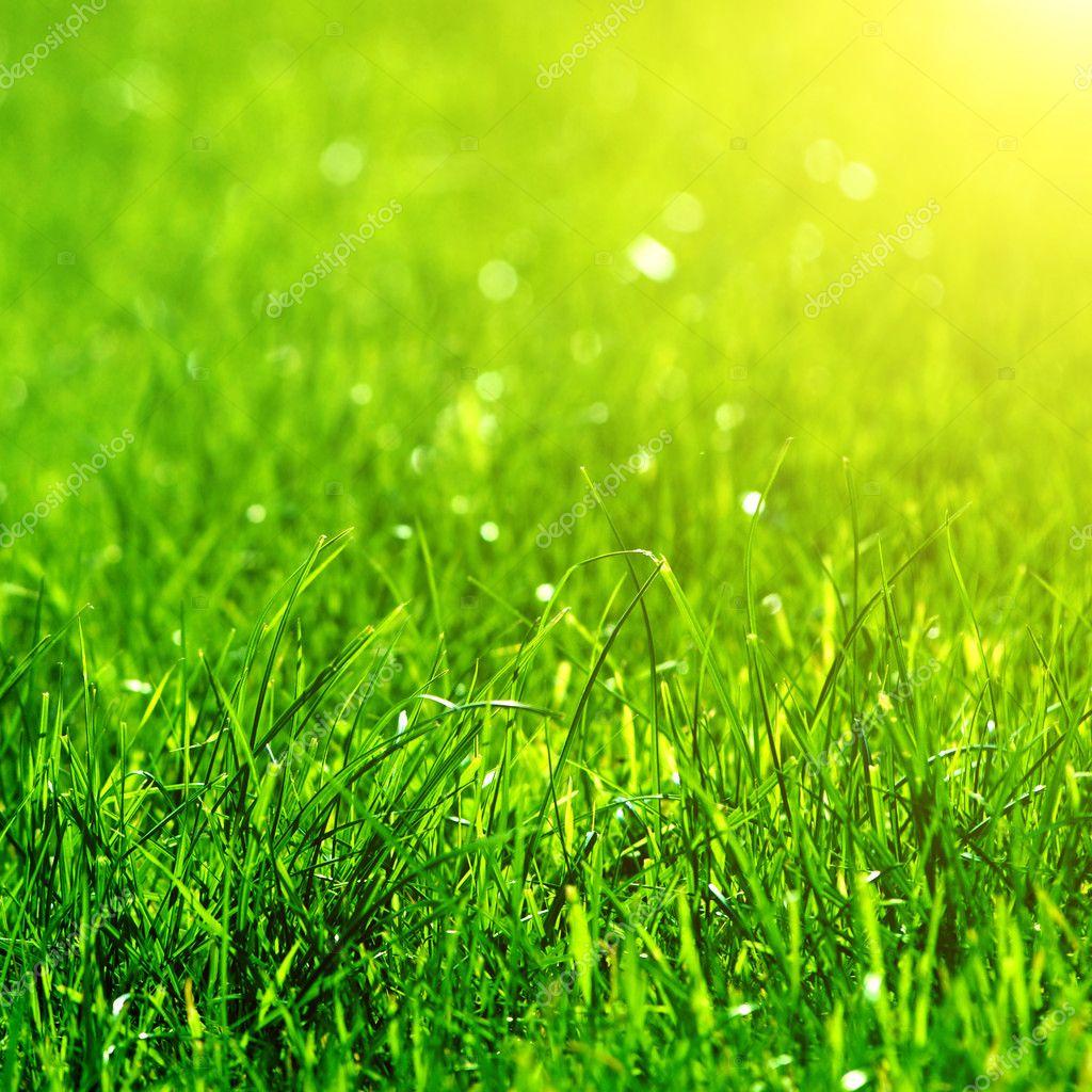 Много зелени и цветов  Прозрачные фоны  Студия Барс