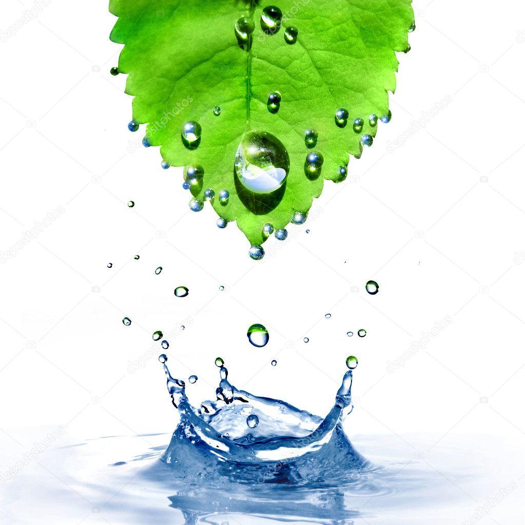 Foglia verde con gocce d 39 acqua e splash isolato su bianco for Finestra con gocce d acqua