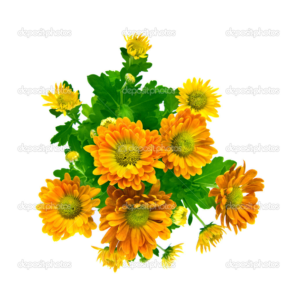 Yellow chrysanthemum bouquet — Stock Photo © artjazz #3384132