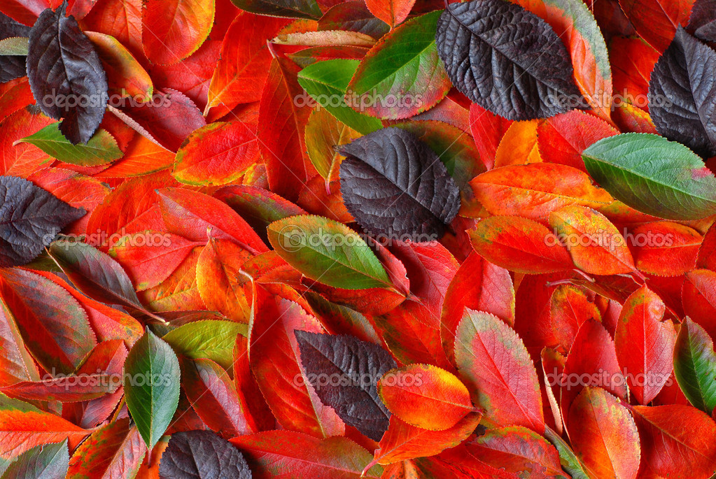 Autumn leaves background  Stock Photo #3384555