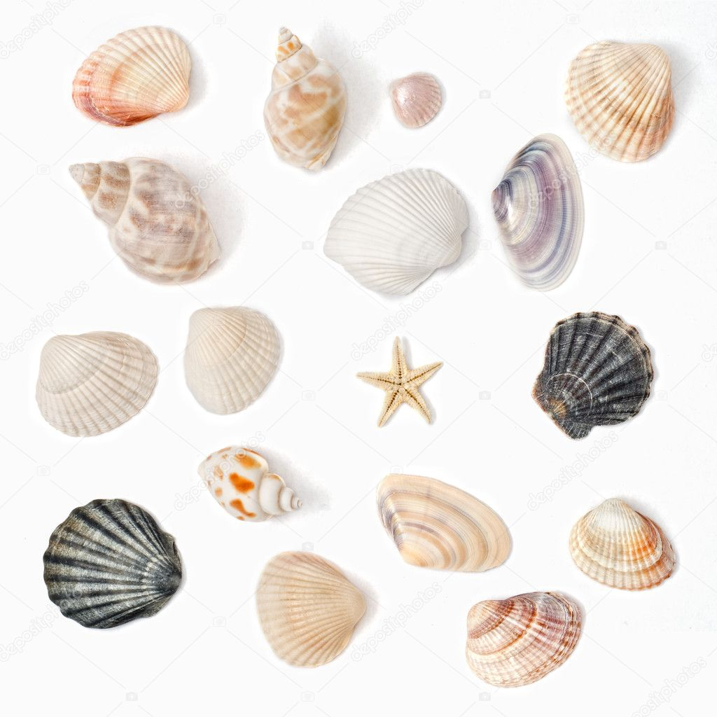 Various color shell isolated on white  Stock Photo #3385037